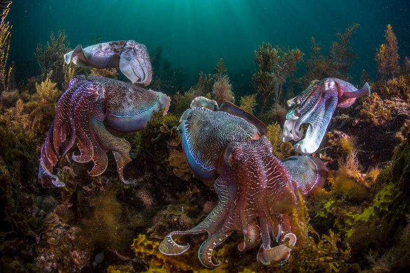 octopus_ajw6qfdhxt5e4ltqqm4c